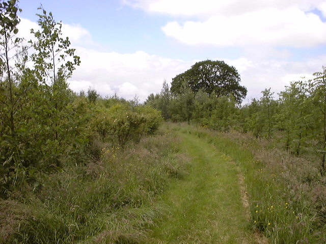 Hazel Pear Wood